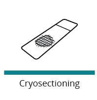cryosectioning