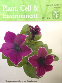 Petunia floral scent production is negatively affected by high-temperature growth conditions