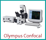 Olympus Confocal Fluoview